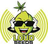 Loud Seeds Strawberry Durban Diesel