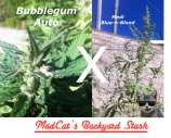 MadCat's Backyard Stash Medi Bubblegum