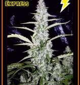 Fantasmo Express
