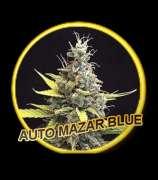 Auto Mazar Blue