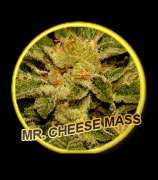 Mr. Cheese Mass