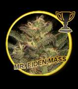 Mr. Eiden Mass