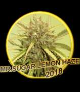 Mr. Sugar Lemon Haze