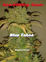 New420Guy Seeds Blue Tahoe