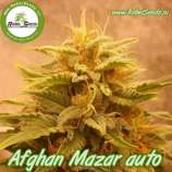 Rebel Seeds Afghan Mazar Auto