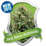 Royal Queen Seeds Jack Herer Automatic