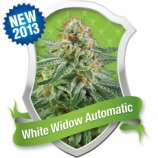 Royal Queen Seeds White Widow Automatic