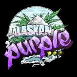 Seedsman Alaskan Purple