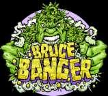 Bruce Banger