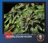 Bubblegum Kush