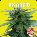 The Moon Seeds AK Rapid