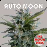 The Moon Seeds Auto Moon