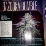 Verified Genetics Bazooka Bumble