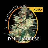 Vision Seeds Delhi Cheese