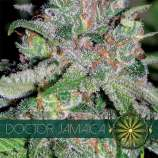 Vision Seeds Doctor Jamaica