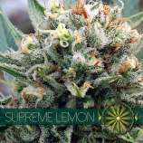 Supreme Lemon