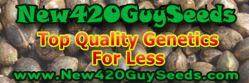 New420Guy Seeds