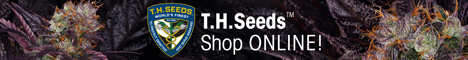 T.H.Seeds - Cannabis Seeds - Shop ONLINE!