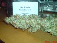 Big Buddha Seeds Freeze Cheese '89 - photo made by JAHJAHChildren