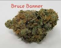 Dark Horse Genetics Bruce Banner - photo made by TheHappyChameleon