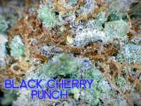 In House Genetics BlackCherry Punch - photo made by JustinSanDiego
