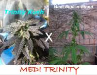 Picture from MadCat (Medi Trinity)
