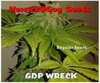 New420Guy Seeds GDP Wreck - photo made by New420Guy