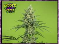 Picture from RSeeds (Criminal Plus)