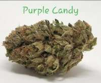Pic for Purple Candy (Smoke A Lot Seeds)