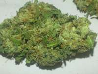 Picture from KushIsGood [Afghan Kush]