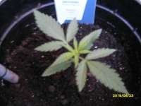 Picture from AK47u (Sticky Beast Automatic)