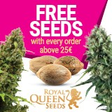 Order feminized cannabis seeds online and get free seeds as a bonus!
